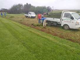 Farm Fresh Instant lawn Freshly cut and Delivery same day