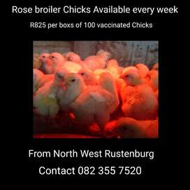 Rose broiler Chicks Available every week