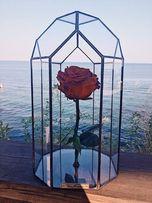 Роза в колбе , эксклюзивная роза в колбе , стабилизированая роза