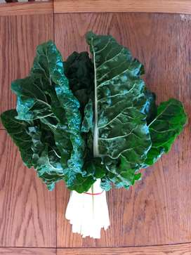 Beautiful Fresh Spinach —Swiss Chard Fordhook Giant