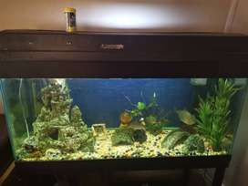 Full fish tank with +-13 tropical fish worth R4000 and two heaters, fi