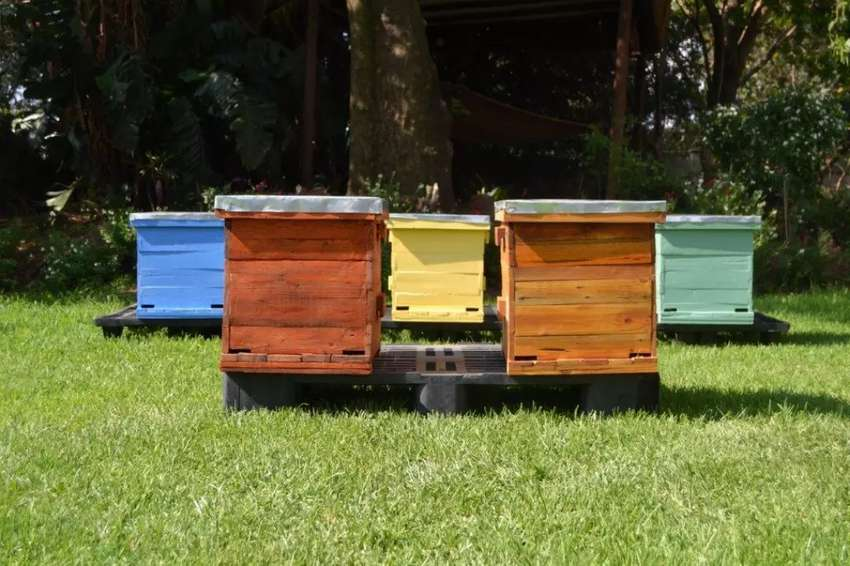 Beehive's For Sale 0