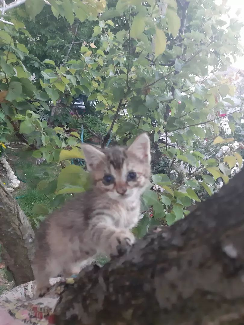 Mačići 0