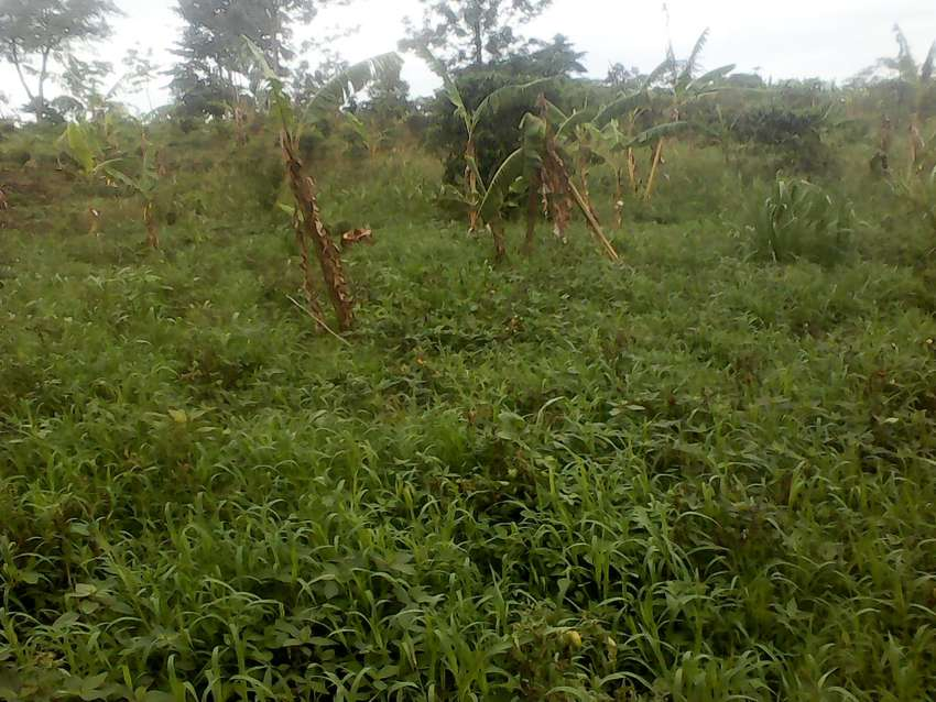 Buloba forest park area 1km from forest park 50x100 titled plot at 23M 0