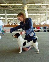 Хендлер. Занятие с собакой. Подготовка к выставке. Киев Позняки, Дарни