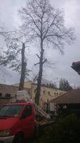 Wycinka drzew Poznań , Puszczykowo, Komorniki i okolice