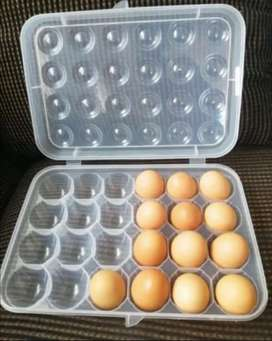 EXCELLENT EGG CONTAINERS 24