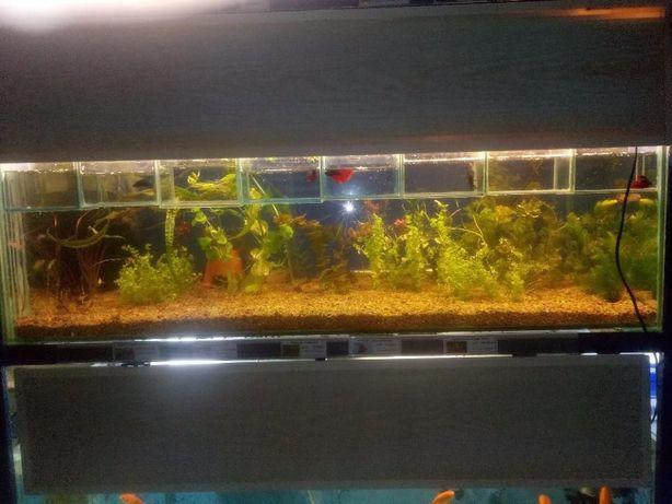 оптово розничный центр продажи аквариумных рыбок с Харькова Киев - изображение 5