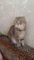 Кот Марсик готов приехать к вашей кошечке!