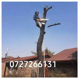 Tree felling and rubbish removal