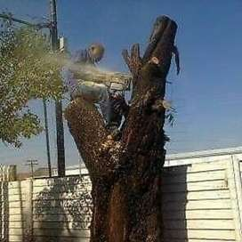 Boksburg Tree Felling Services
