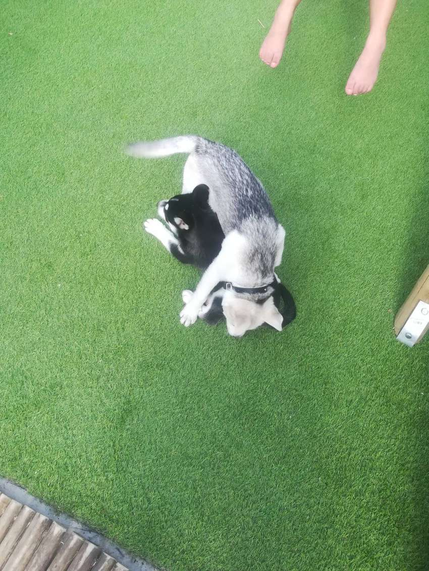 Artificial Grass 4m x 5m in excellent condition