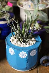 Image of Hand Made Pots with succulents
