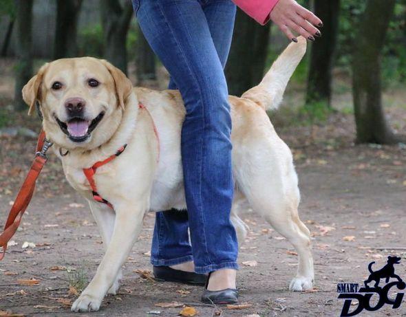 Дрессировка собак в Запорожье - команда SmartDog Запорожье - изображение 4