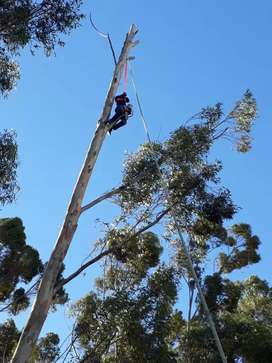 Active tree felling and stump removal services