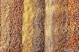 Продам Дерть Кукурузна-пшенична-ячневая!