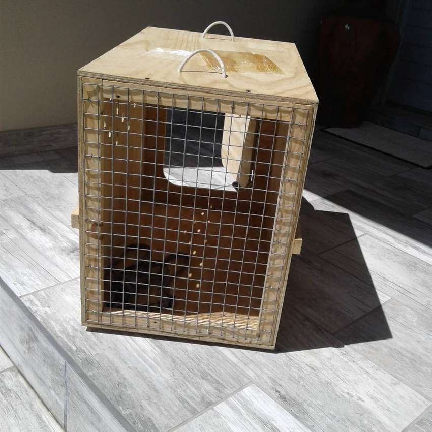DOG BOX/CRATE Only for Sale till Sunday 24th MarchTravel Dog Box/Crate 0