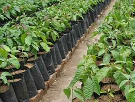 Plant Bags for planting plants