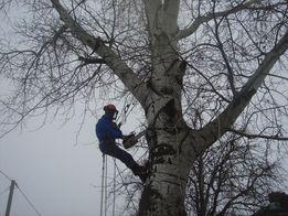 СПИЛ,обрезка деревьев АЛЬПИНИСТАМИ или с вышкой