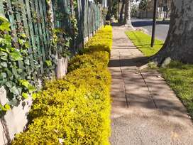 HYGIENE&SHRUBS the landscaping and cleaning company