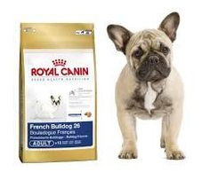 Royal Canin French Bulldog BULDOG FRANCUSKI 15KG