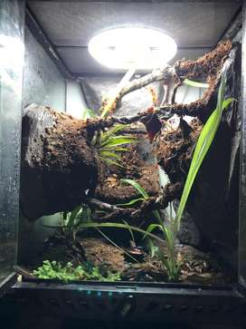 Vivarium Enclosures