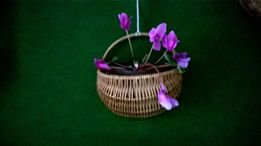 Wyprzedaż kosz na kwiaty z wikliny