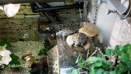 Платформа для черепахи в аквариум