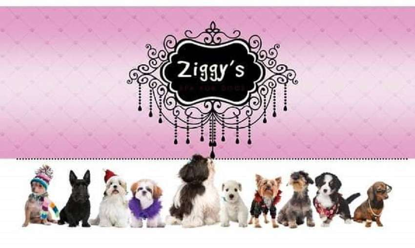 Ziggy's Spa for Dogs Tel No. 0