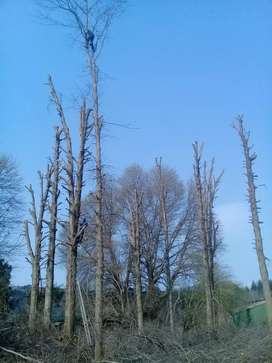 A-Z Garden service and Tree felling.