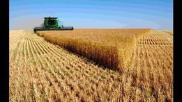 Продам Землю 6,2га в Крыму, для сельхоз нужд!