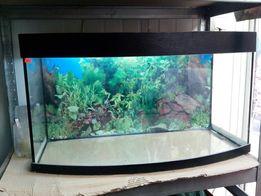 Акваріум(аквариум) з півкруглим переднім склом