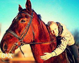 Лошади и собаки для фотосессий