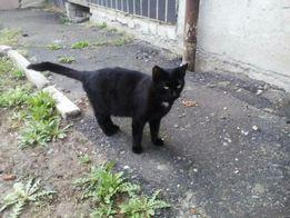 Отдам чёрного котёнка, мальчик,7 месяцев