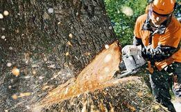 Спил деревев