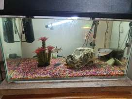 60 Ltr fish tank for sale with fish and accesories