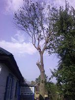 ВЫРЕЖУ аварийные проблемные деревья