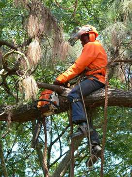 Get free quote for tree felling/garden services and rubble removal