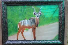 Kudu in road