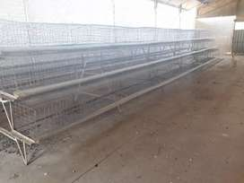 6 tier laying cage x 5