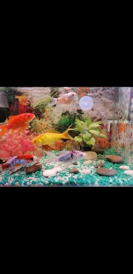 Fish tank everything on photo included negotiable price