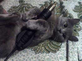 Кот Миша ждет кошечку на вязку