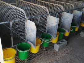 4 Calf cages for sale