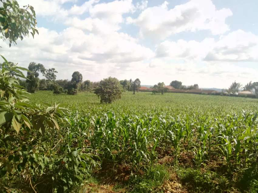 Muthaiga North 1acre at 97m 0