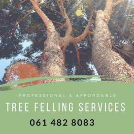 Tree and stump removal, as well as refuse removal