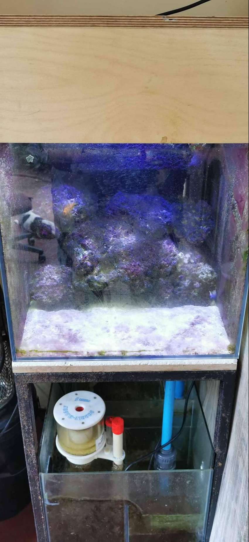 MARINE FISH TANK AND ACCESSORIES 0