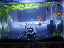Gold fish and warm water fish plus tanks