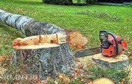 бензопила. срез деревьев,порезка дров