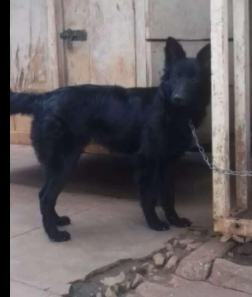 Sold black female available 0