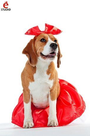 Юбочка + бант костюм для собаки Харьков - изображение 2